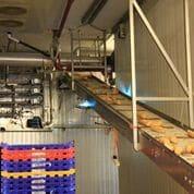 UVC transportbånd dekontaminering i brødindustrien
